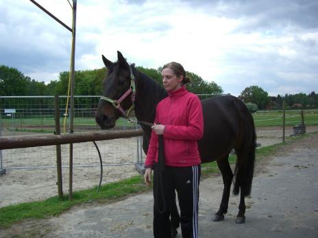 triebige pferde angaloppieren